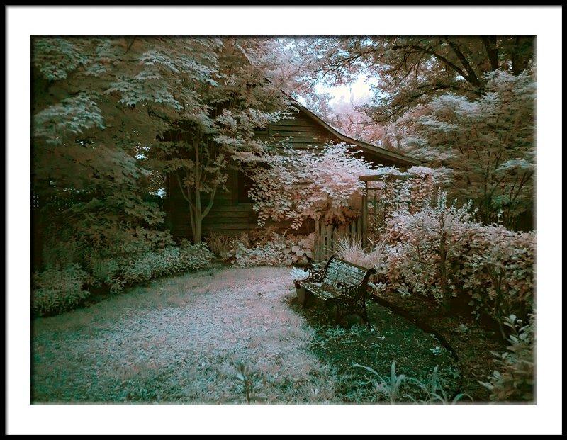 Woodland Garden Corner in False Color IR
