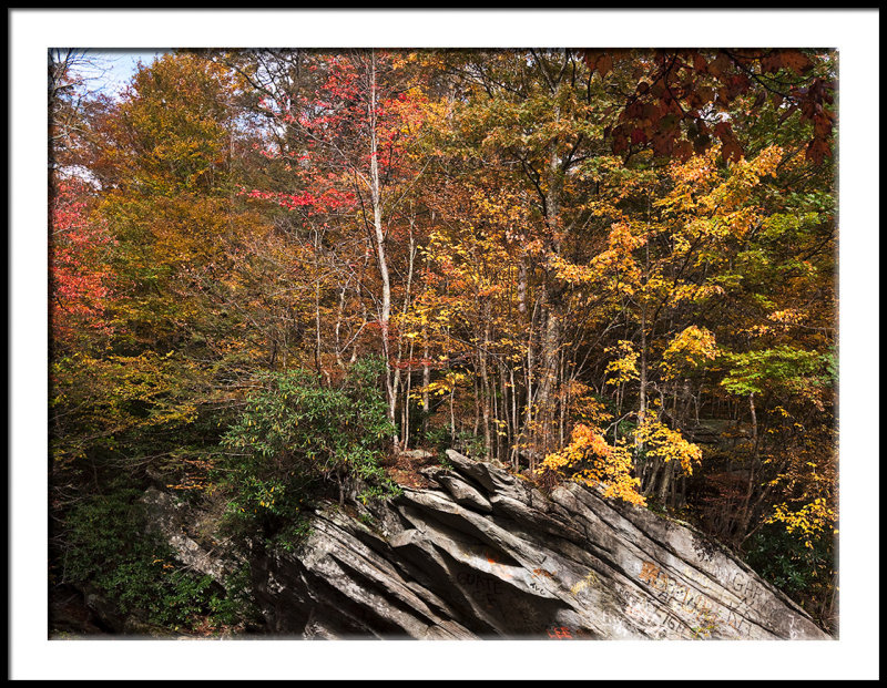 Rock Folds and Fall Color