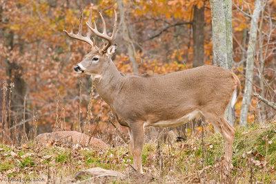 Buck profile