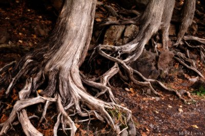 Roots on the river