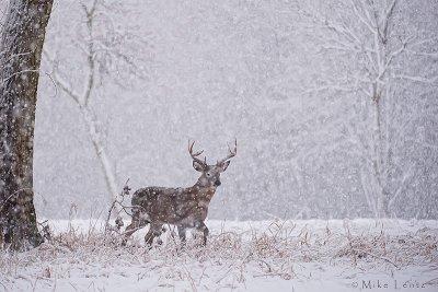 8 point buck in heavy snowfall