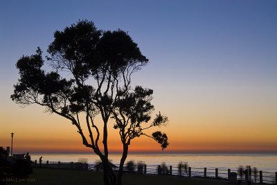 La Jolla tree silhouette