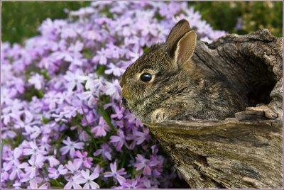 Bunny in log near phlox