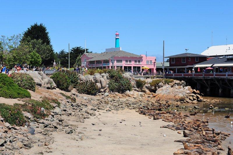 58_Monterey _rocks and seals.jpg