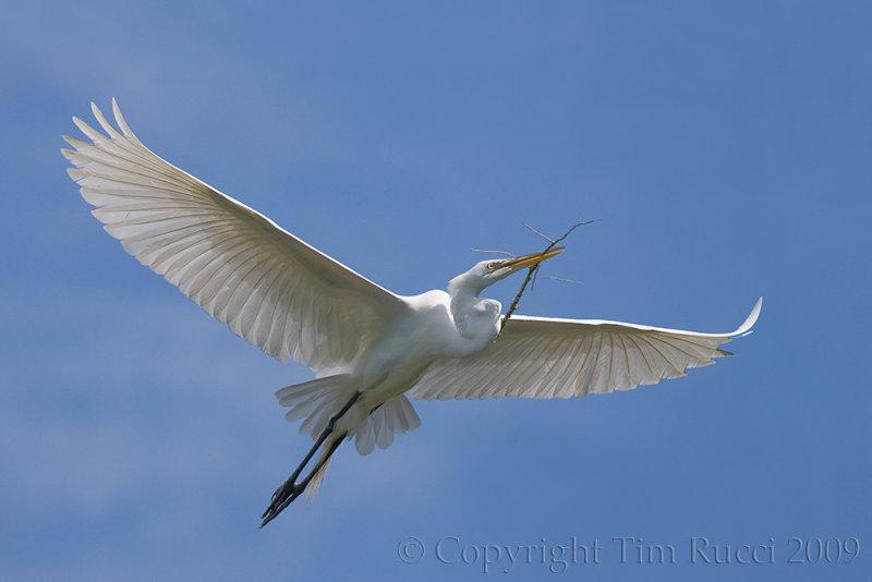 63654 - Great Egret