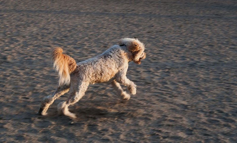 Dog at beach #2