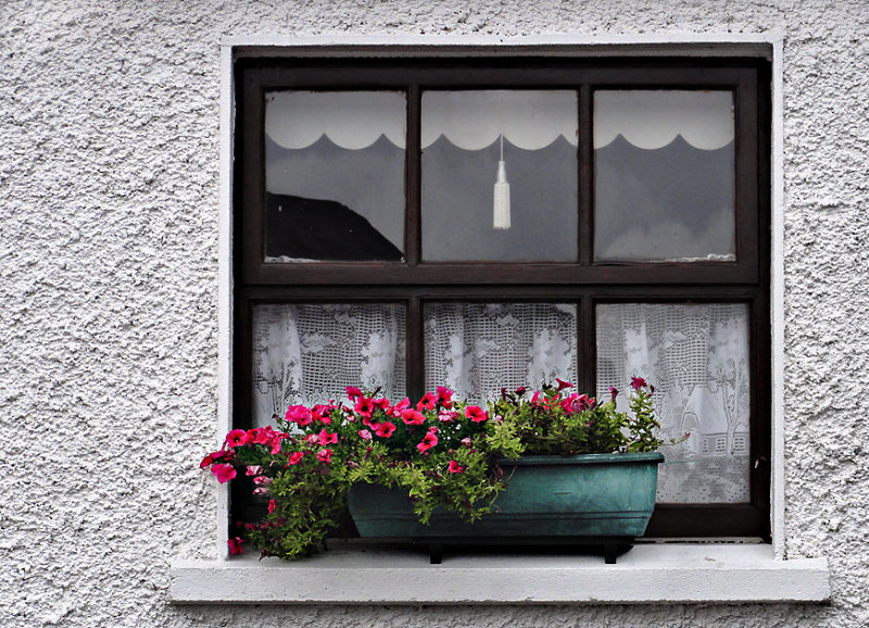 Flowers in a cottage window.