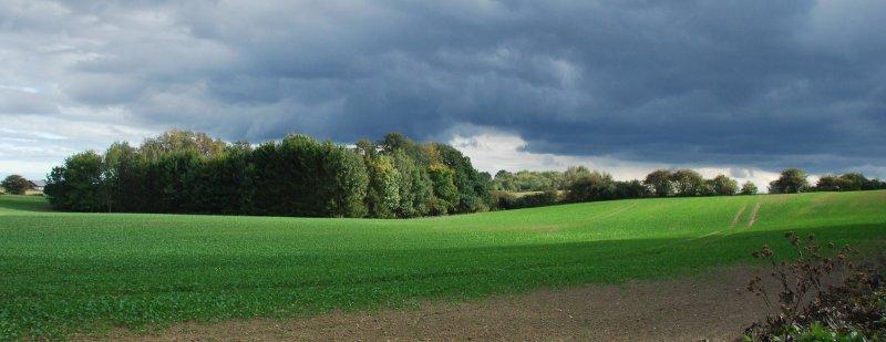 Fresh fields