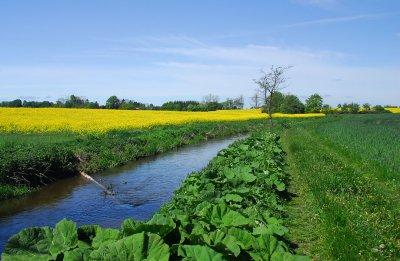 Spring landscape in Denmark