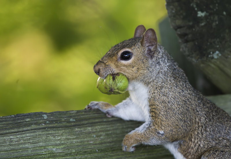 Squirrels Senior Portrait