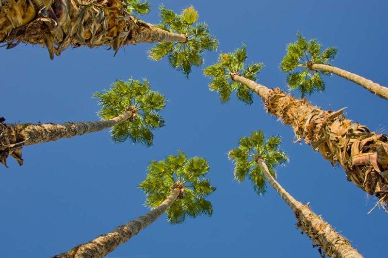 Palm condo