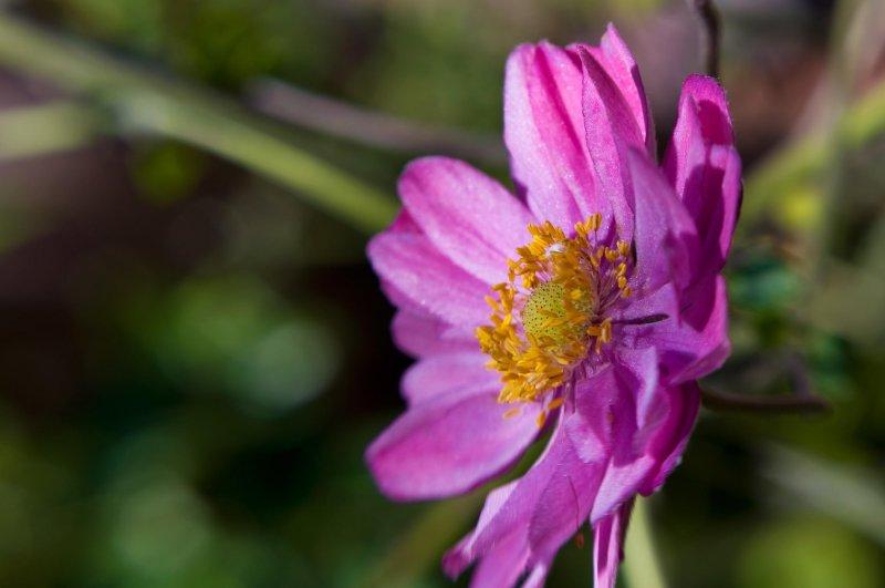 dewy flower