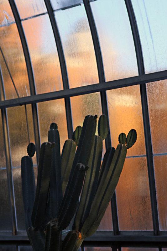 IMG_0137--vitrine-900.jpg