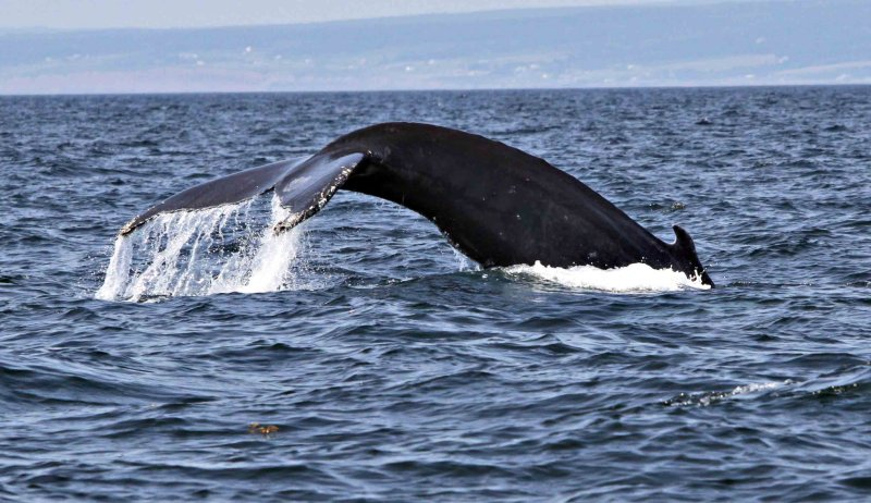 IMG_0094-baleines-2300.jpg
