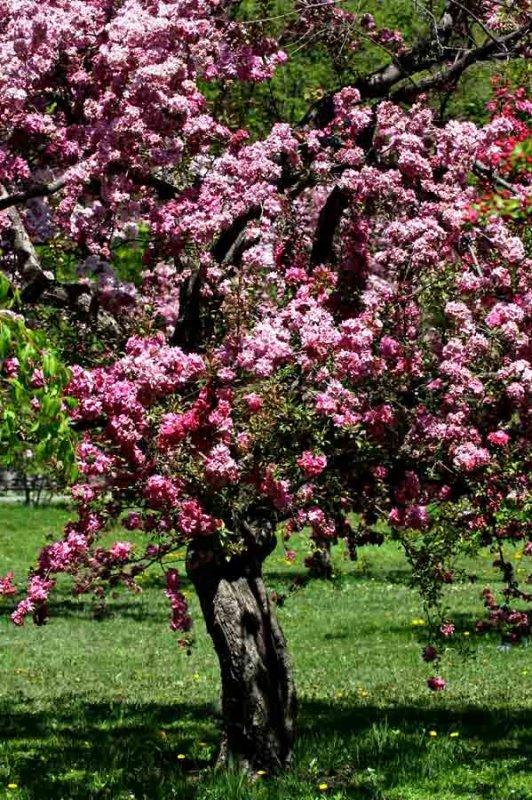 378-arbre en fleur7-900.jpg