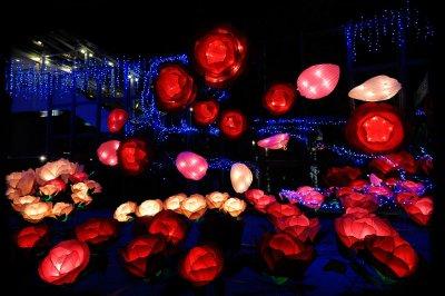 Lantern Festival (1)