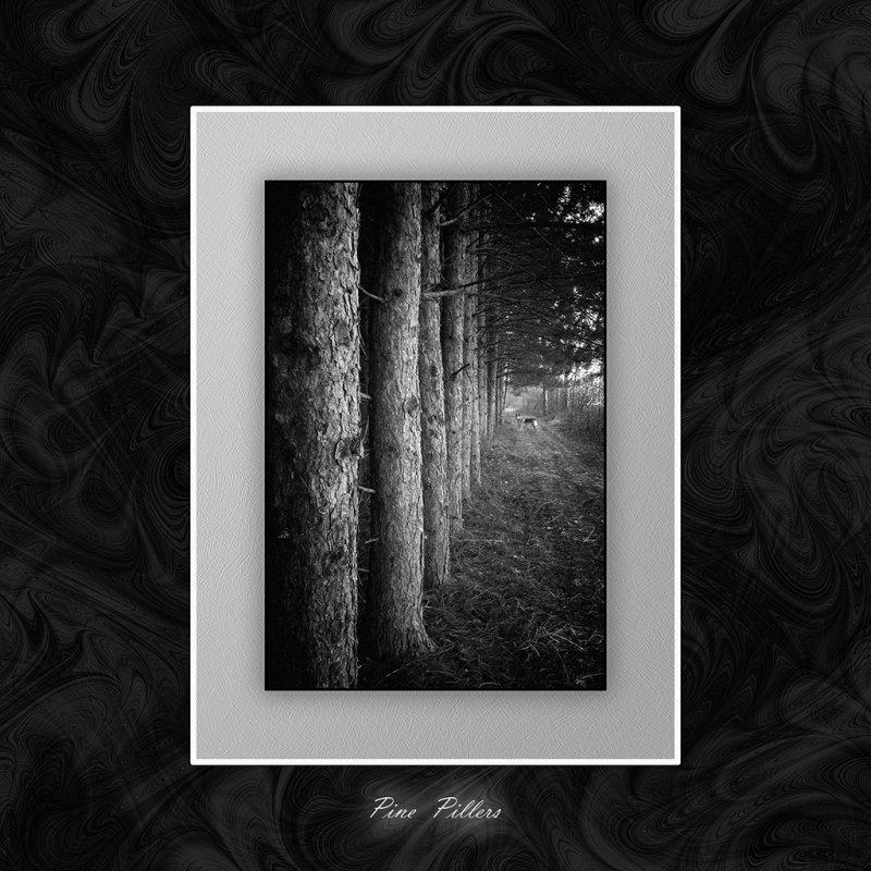 Pine Pillers.jpg