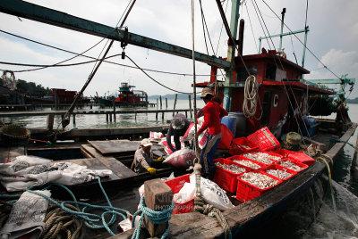 Pangkor : Boat returning