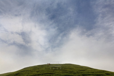 Worker on a hill