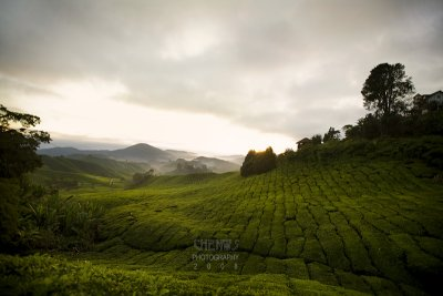 Sunrise, Cameron Highlands