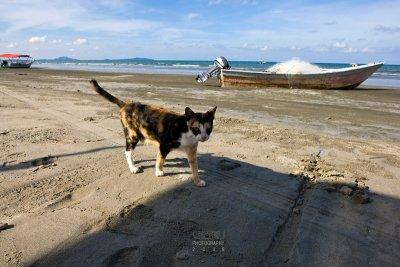 Kitten at Beserah Beach
