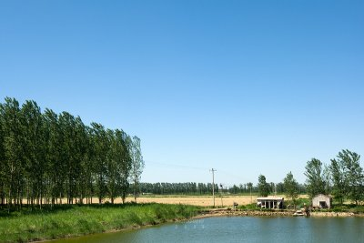 Rural scenery (CWS9249)
