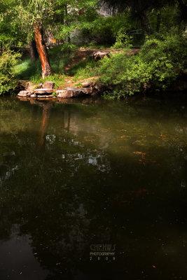 Red carps at hotspring (CWS8796)