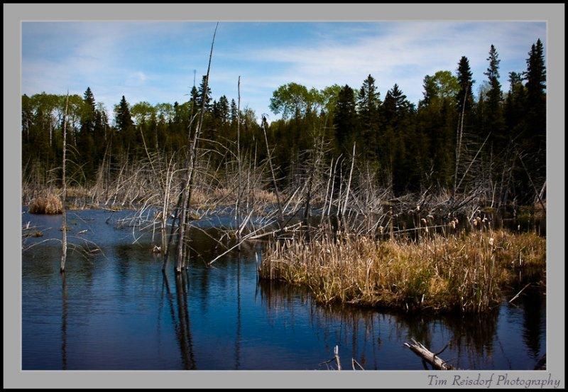 Lake of the Woods III