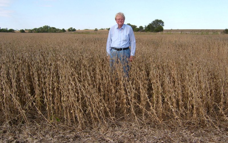 Tall Soybeans