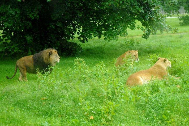 Blair Drummond Wildlife & Safari Park DSC_2110a.jpg