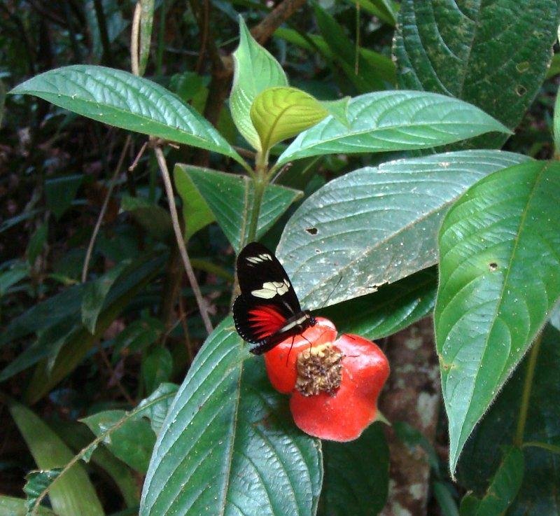 Butterfly on Hot Lips