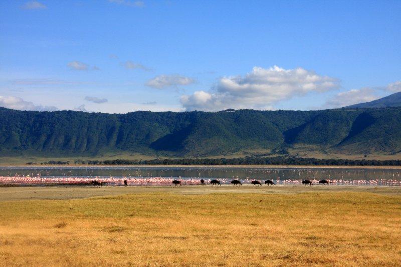 Wildebeest and Flamingos at Lake Magadi
