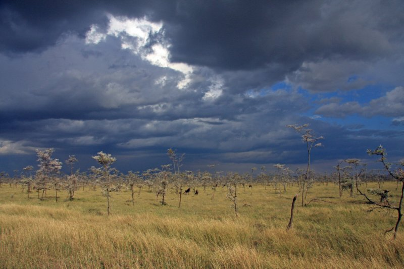 Wildebeest and clouds