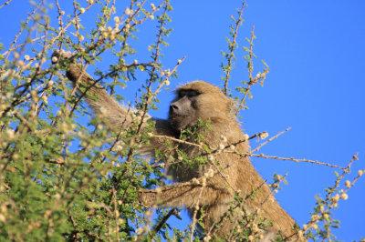 Treetop feeding