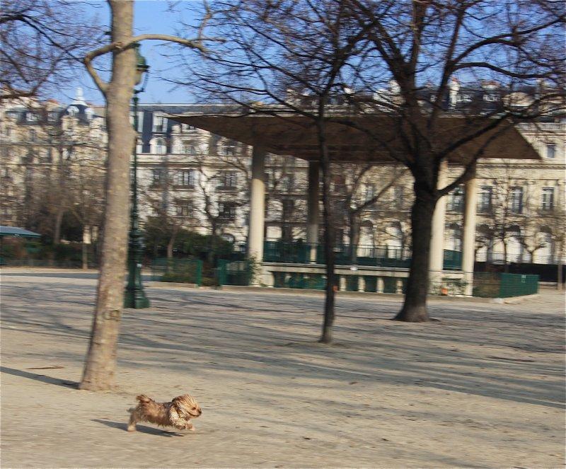 Run doggie, run