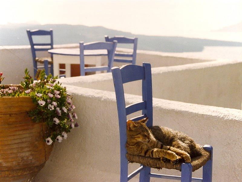 Sleeping cat in Santorini
