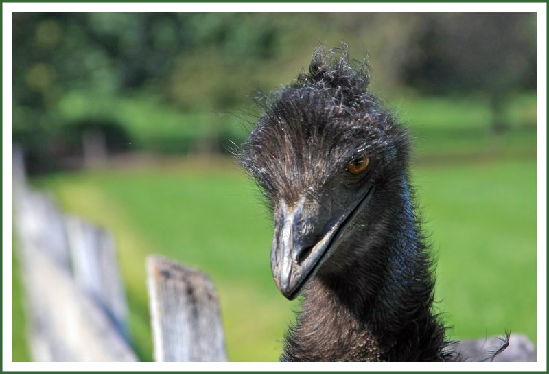 Portrait of Mr. Emu