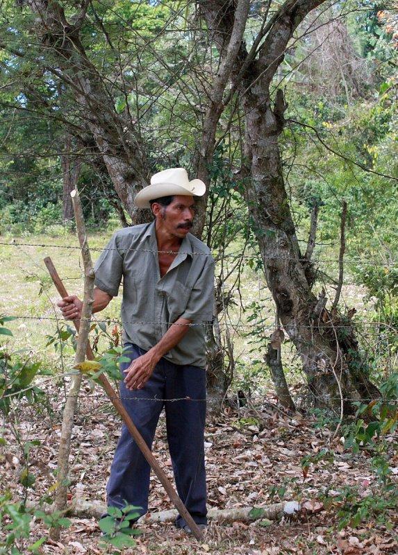 Worker On Coffee Farm