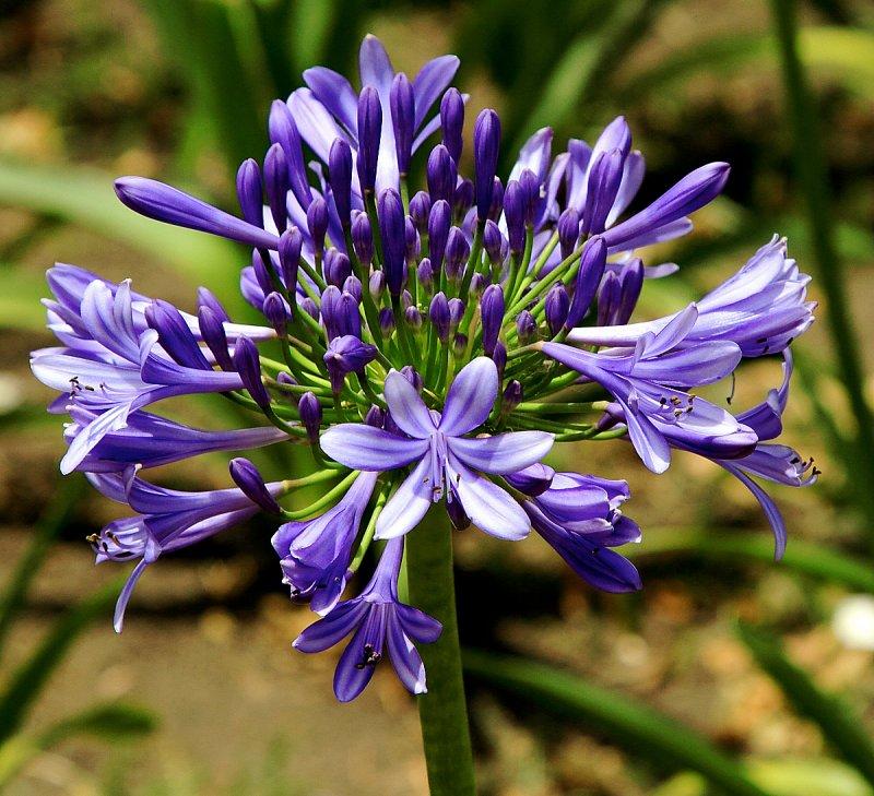 Flower in Recoleta