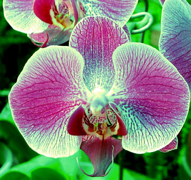 Orchid at Japanese Gardens