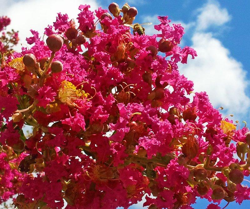 Tree in Puerto Madero Dique III
