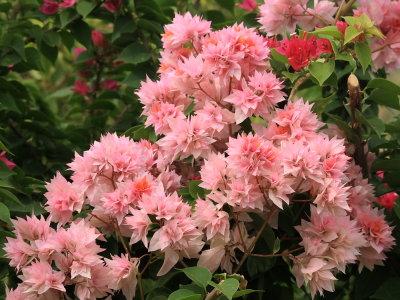 Flowers at Villa Laguna