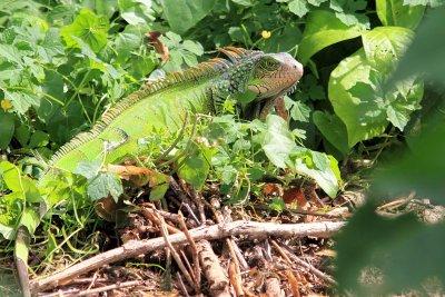 Smithsonian Punta Culebra Nature Center