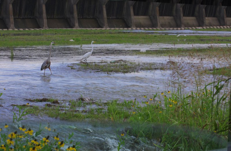 Spillway Water Attracts Birds