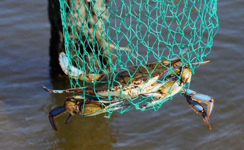 No Escape - Louisiana Blue Crab