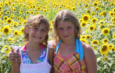 In the Sunflower Patch