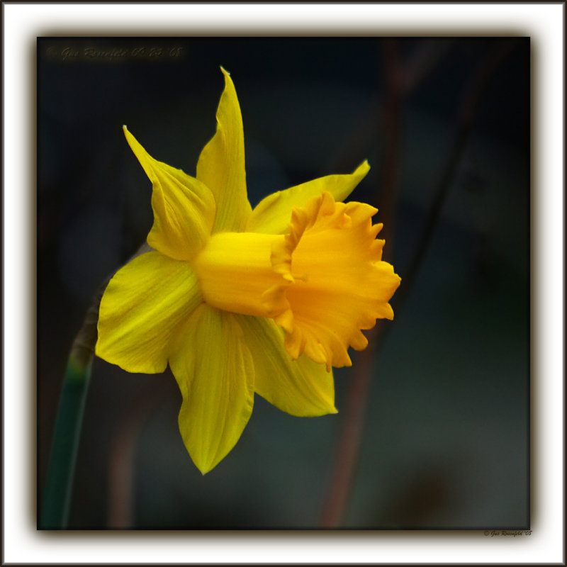 A Daffy Dill, From The Loving Nut Whos Always In A Time Pickle<br>Happy 10<sup>th</sup> Hannah!!