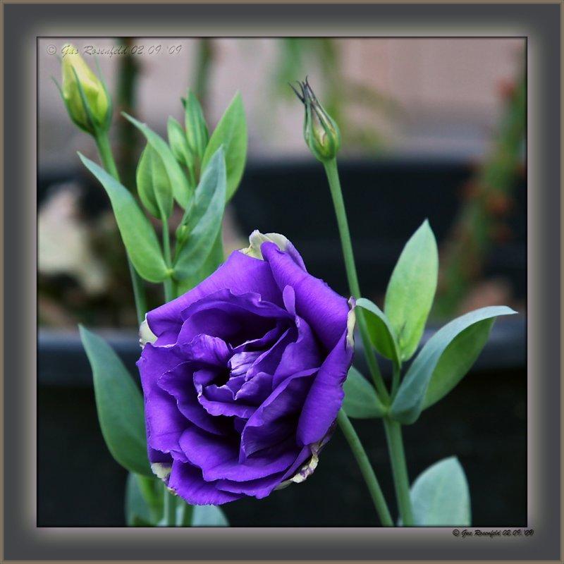 Kristys Flower