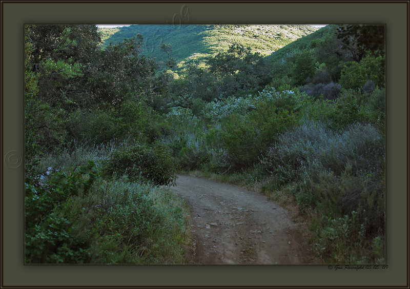 Looking Back Toward Sycamore Canyon From Wood At End Of Day