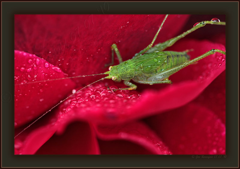 Wheres My Starbucks® Gus? Katy - did get a little grumpy during morning-dew shoots, but Katydid dew ;-)
